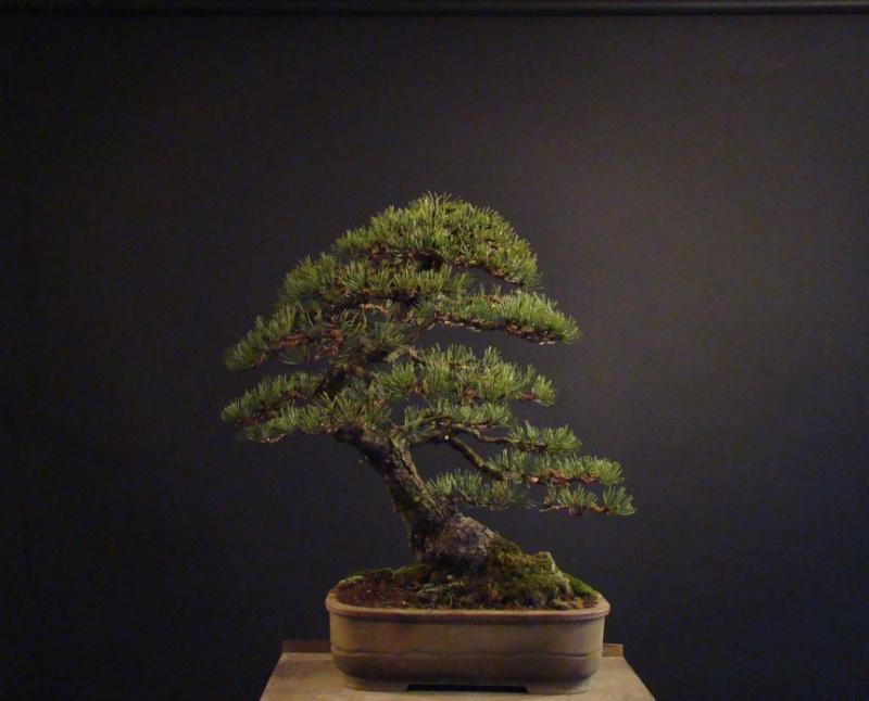 Pinus mugo 2004 - Page 2 Mtr_1110