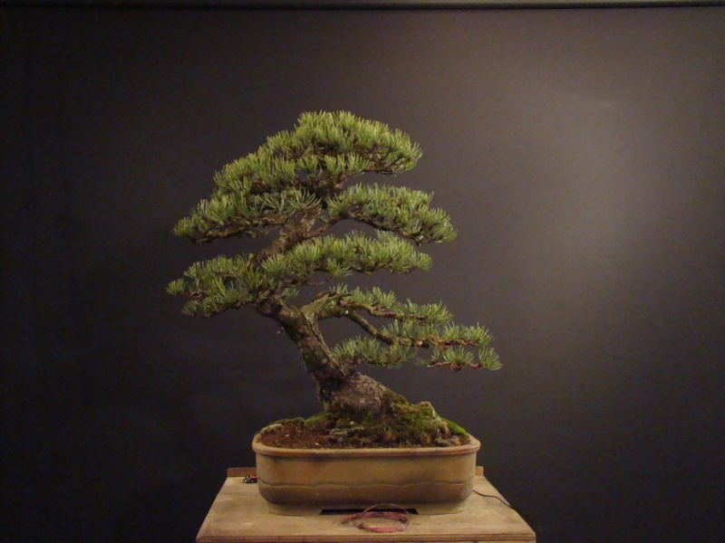 Pinus mugo 2004 - Page 2 Mtr_210