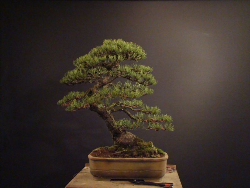 Pinus mugo 2004 - Page 2 Mtr_310