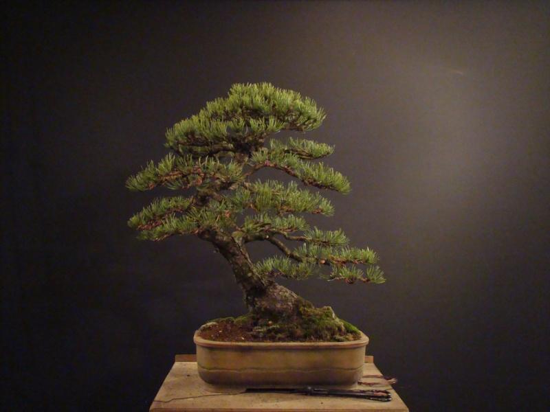 Pinus mugo 2004 - Page 2 Mtr_410
