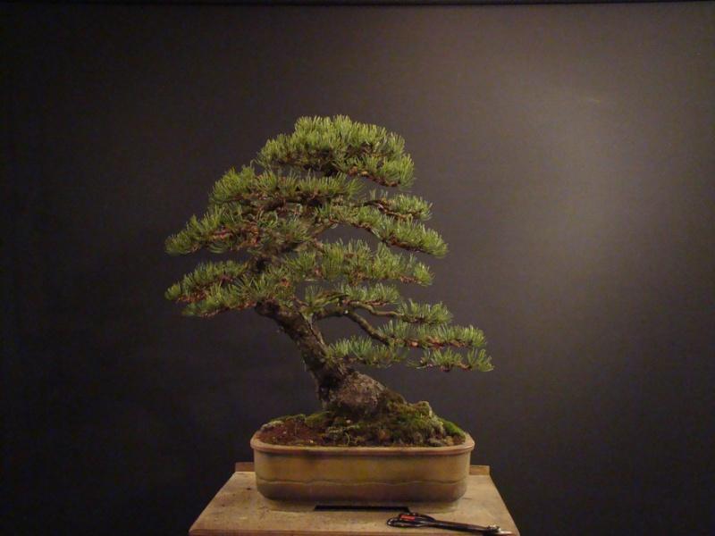 Pinus mugo 2004 - Page 2 Mtr_510