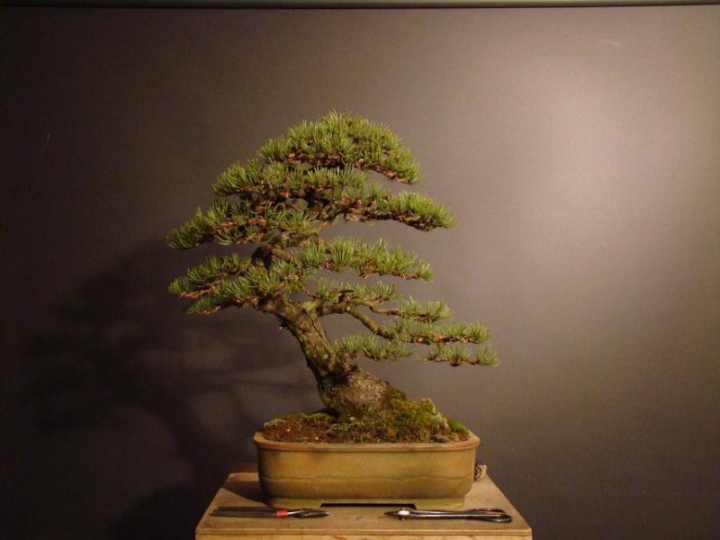 Pinus mugo 2004 - Page 2 Mtr_710