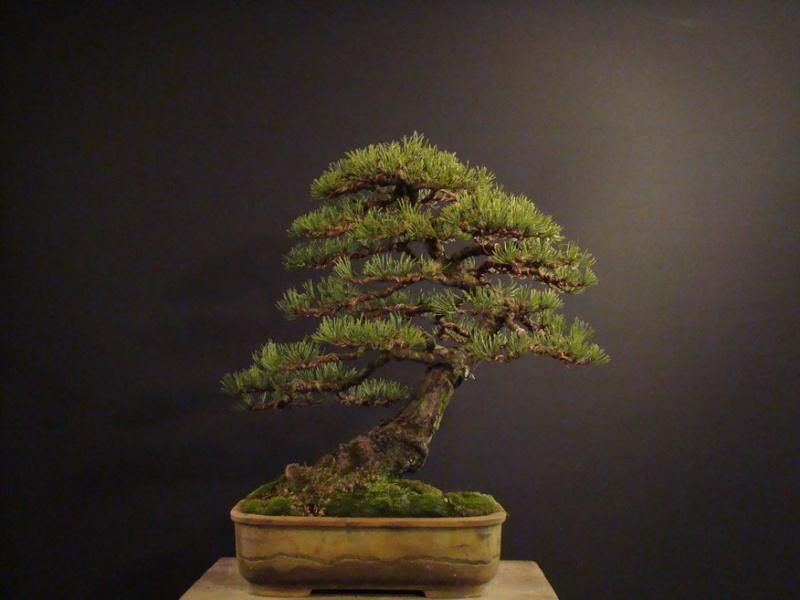 Pinus mugo 2004 - Page 2 Mtr_810