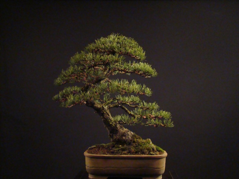 Pinus mugo 2004 - Page 2 Mtr_910