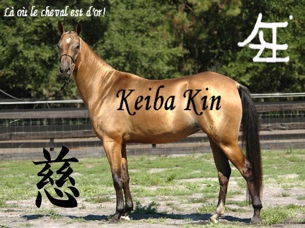 Académie du Keiba kin