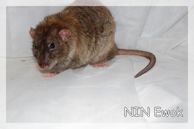 NIN Ewok X IND Bleues Dsc_0011