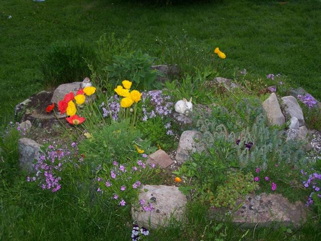 Gardening Thread - Page 2 Flower10