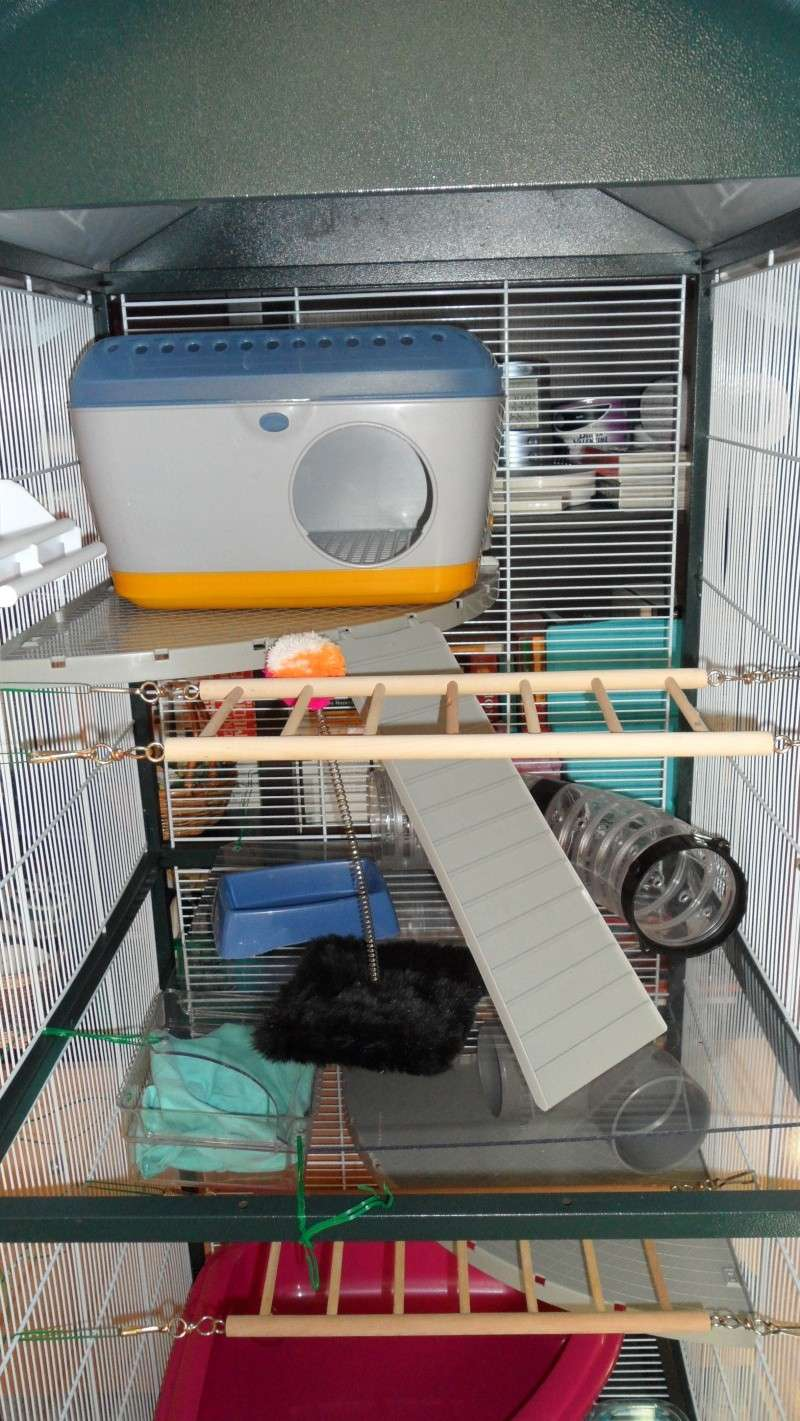 [Vends] [RP-78] Grande volière/cage aménagée pour ratoux Sam_0213