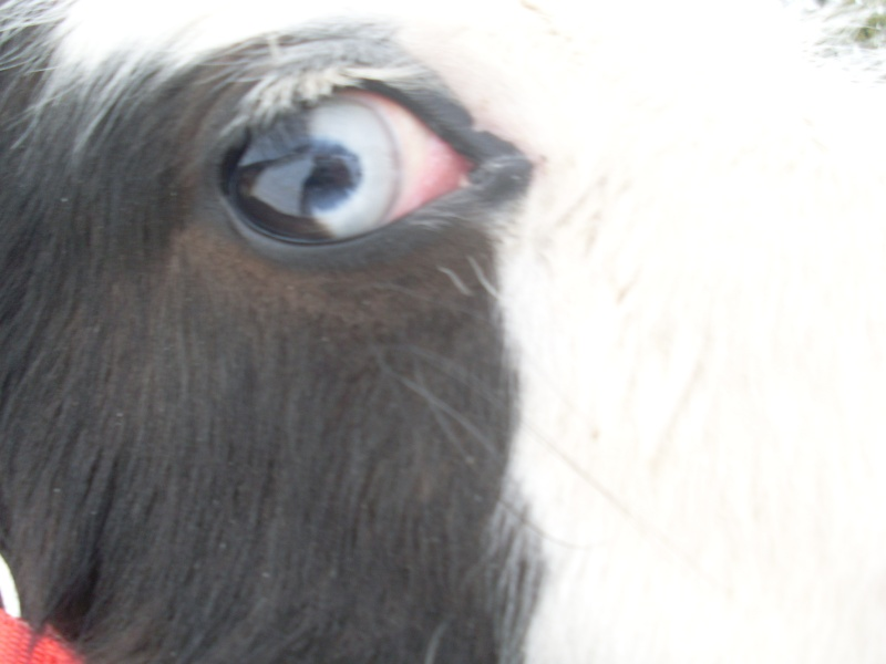 Le pie-noir aux yeux bleus - Page 2 Photo_10