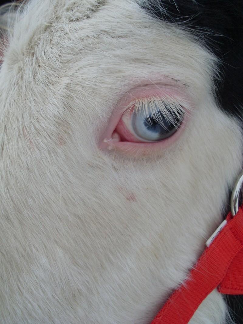 Le pie-noir aux yeux bleus - Page 2 Photo_11
