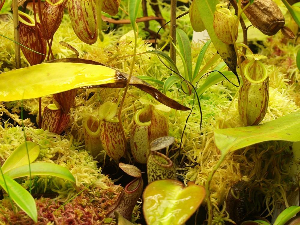 Des fleurs et beaucoup d'autres... Glabra13