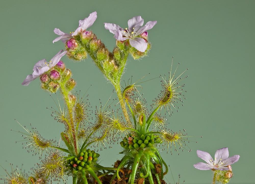 Des fleurs et beaucoup d'autres... P3031710