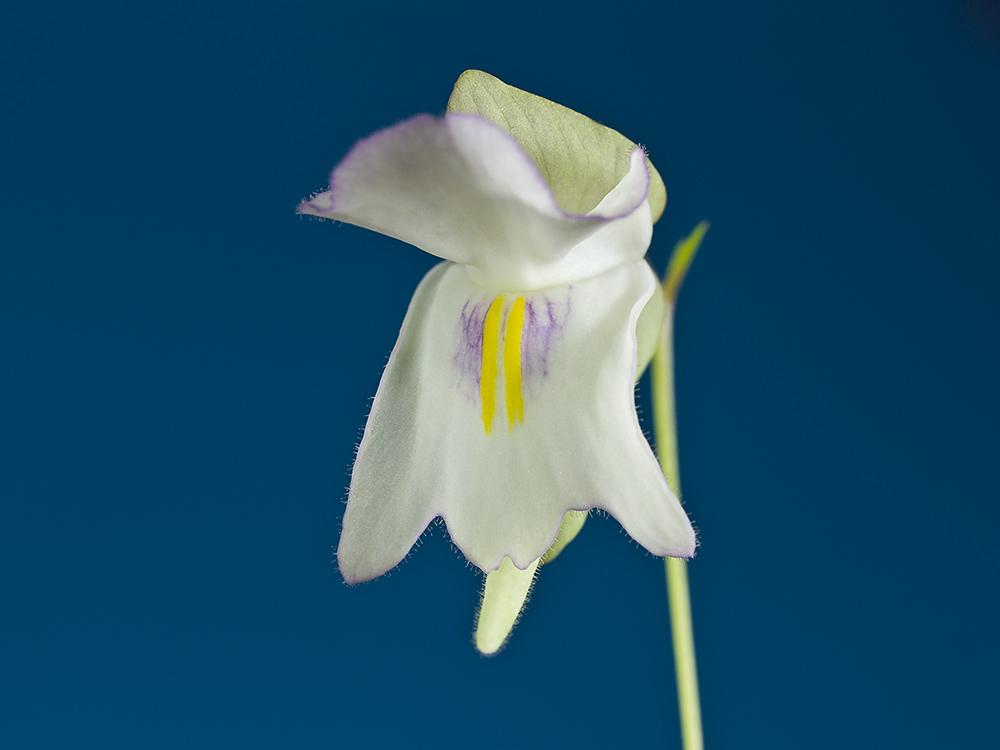 Des fleurs et beaucoup d'autres... P3191816