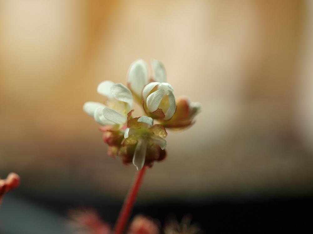 Des fleurs et beaucoup d'autres... P3191819