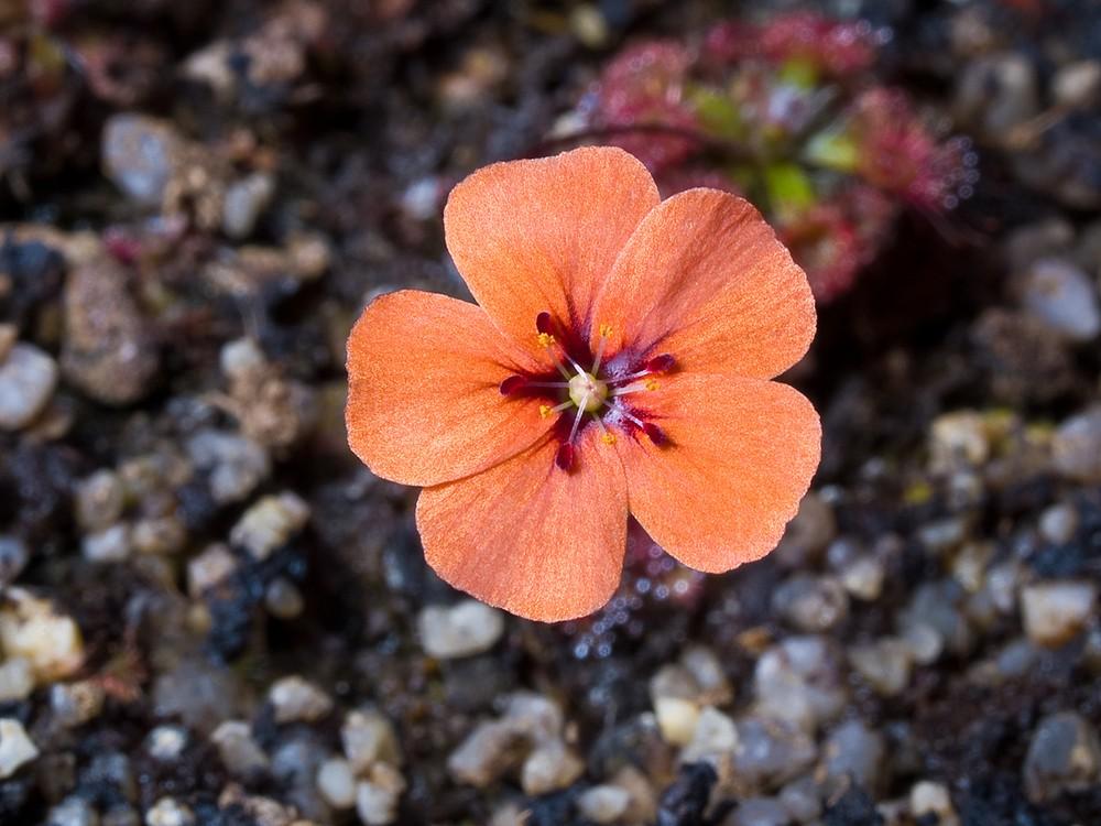 Des fleurs et beaucoup d'autres... P3279113