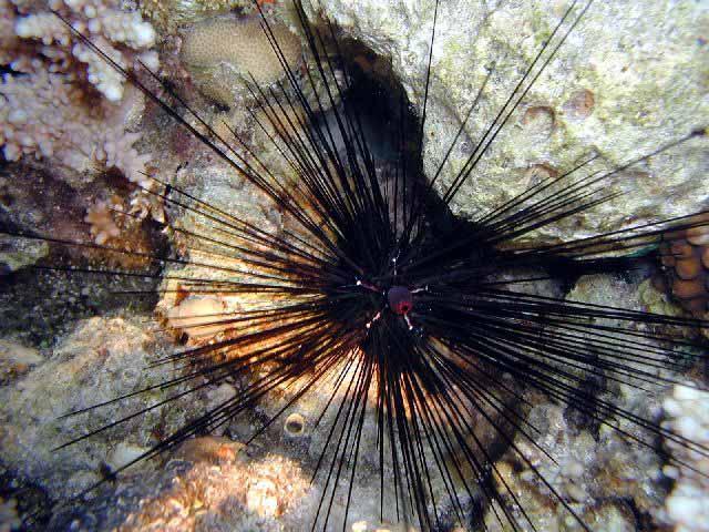 Nano Récif - Page 4 Urchin10