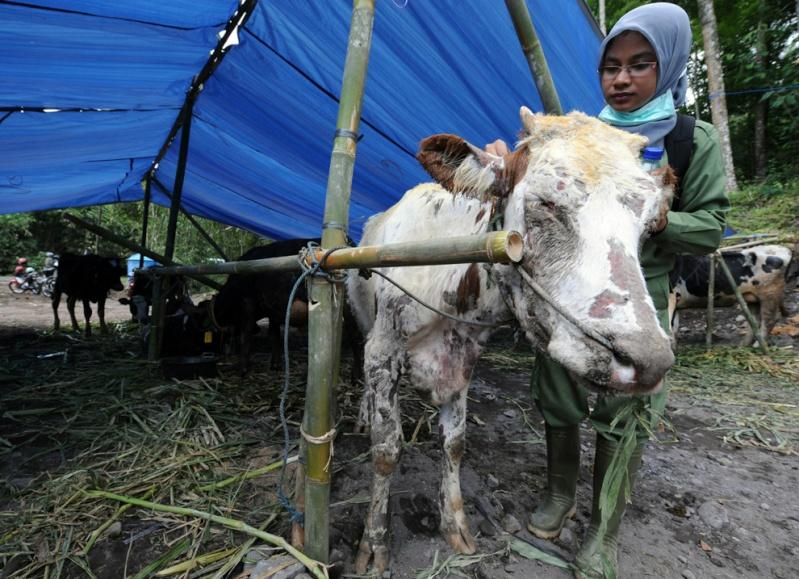 Double catastrophe en Indonésie M20_2510
