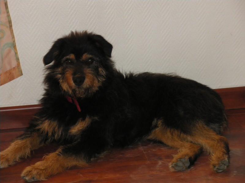 Youki, un adorable petit griffon à l'adoption  Imgp1610