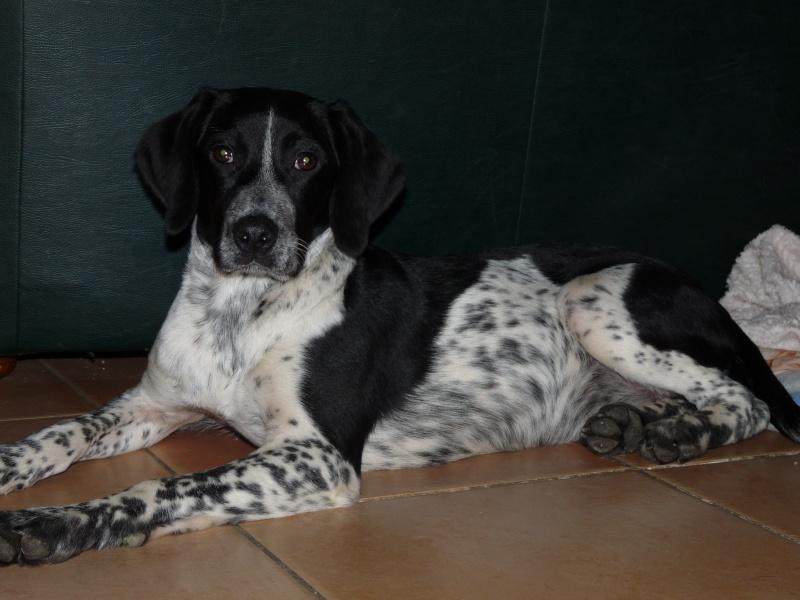 NAYA jeune chienne de 4/5 mois dept11 Naya1010