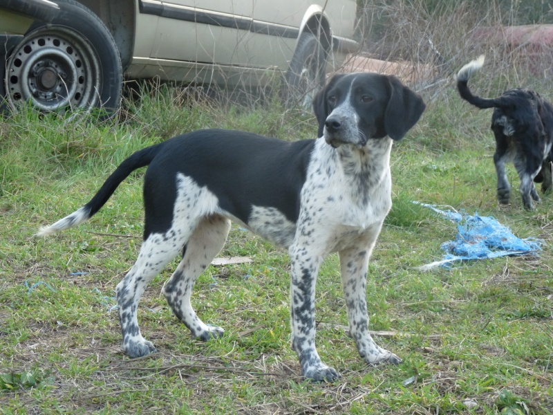 NAYA jeune chienne de 4/5 mois dept11 Small_19