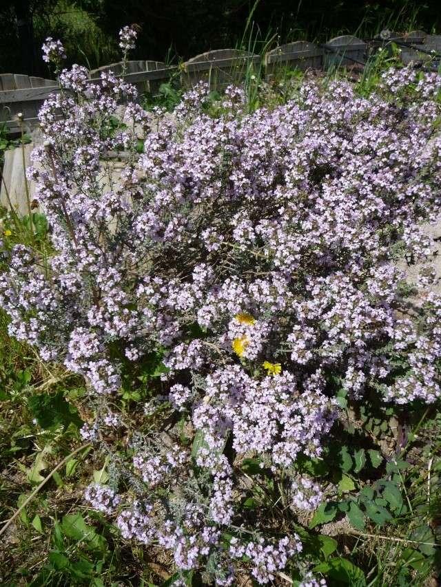 Le printemps a commencé!!!!!!!!!!!! P1080322