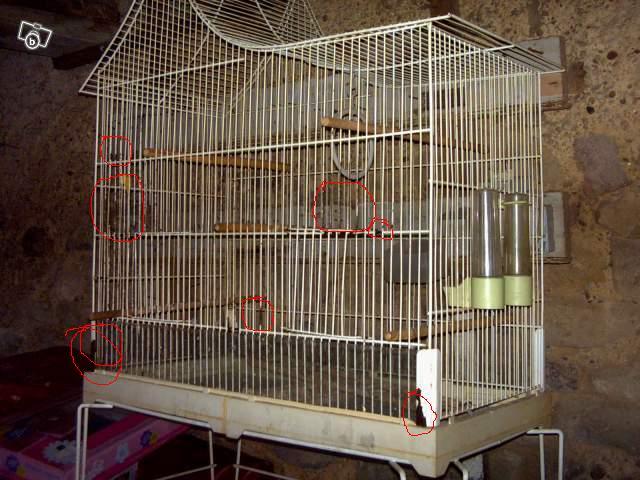 Cherche cage deux rats (88,54) 26001610