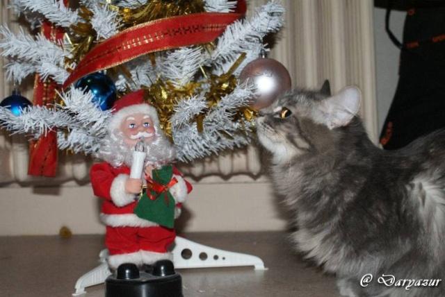 concours photo:  le chat en fête! Dsc02310