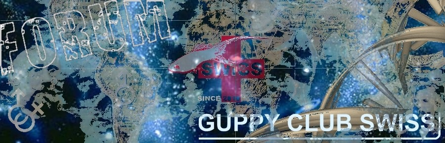 Guppy Club Swiss