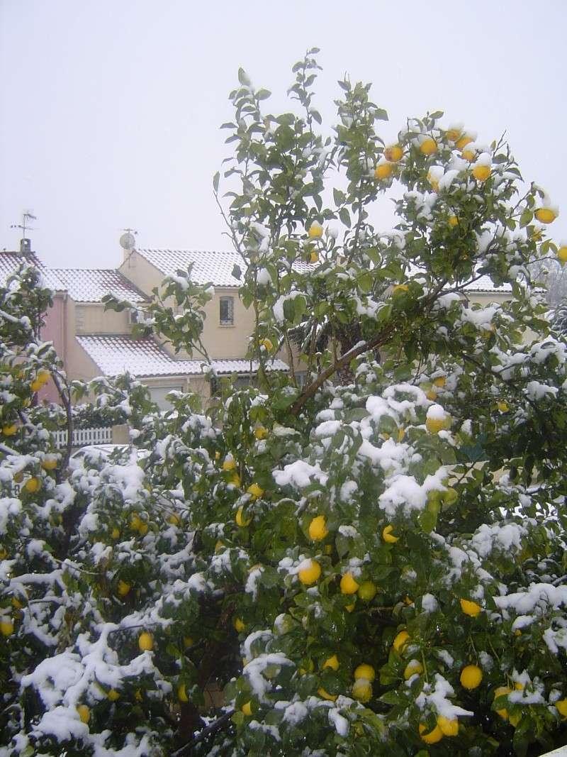 Il neige sur Perpignan ... Vive l'hibernation in natura ! 110