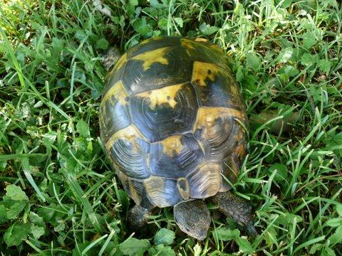 pouvez-vous reconnaître cette tortue merci P1020910