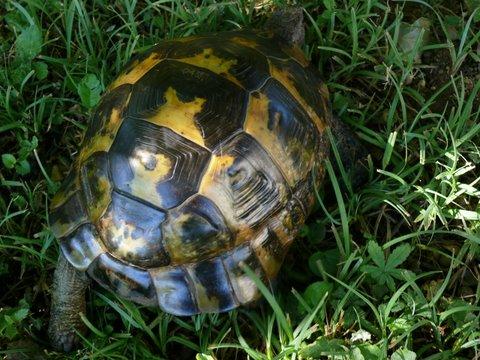 pouvez-vous reconnaître cette tortue merci P1020911