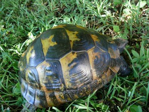 pouvez-vous reconnaître cette tortue merci P1020913