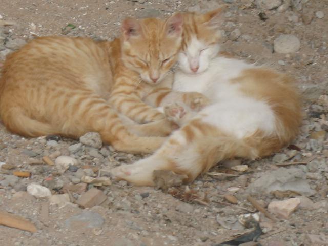 Les Chats d'Essouira 08810