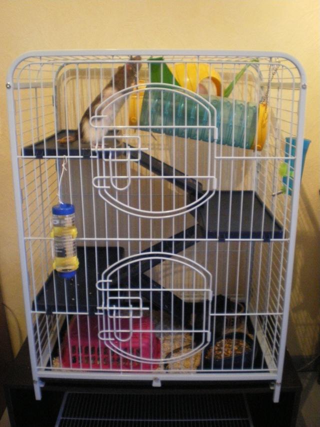 Photos de vos cages Imgp1511