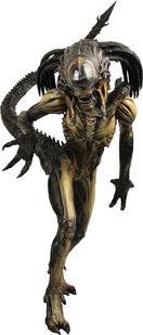 Pred-Alien Chet_b10