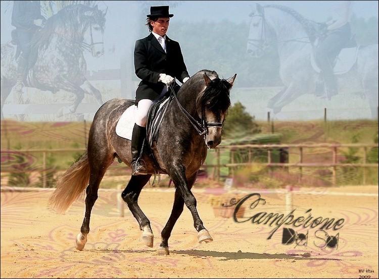 BOX DE CAMPERONE DEL SOL Campar10