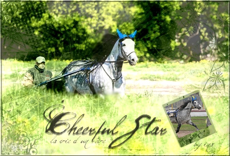 BOX DE CHEERFUL STAR Cheerf10