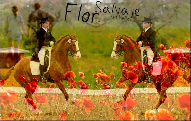 BOX DE FLOR SALVAJE VD HELLE Flor_s10