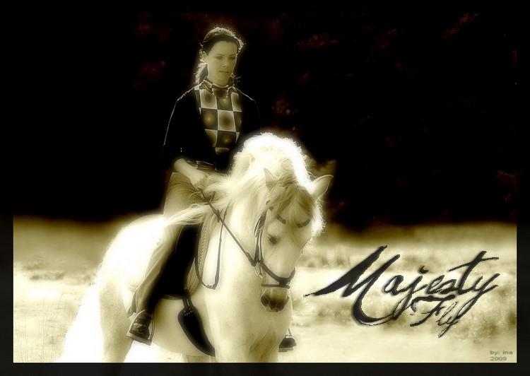 BOX DE MAJESTY FLY Majest10