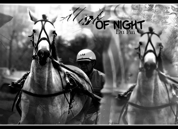 BOX DE MIST OF NIGHT DU PIN Mist_o10
