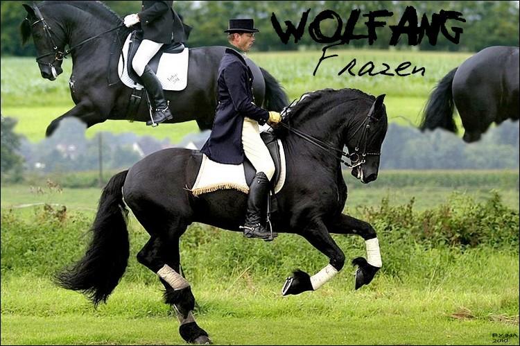 BOX DE WOLGANG FRAZEN Wolfan10