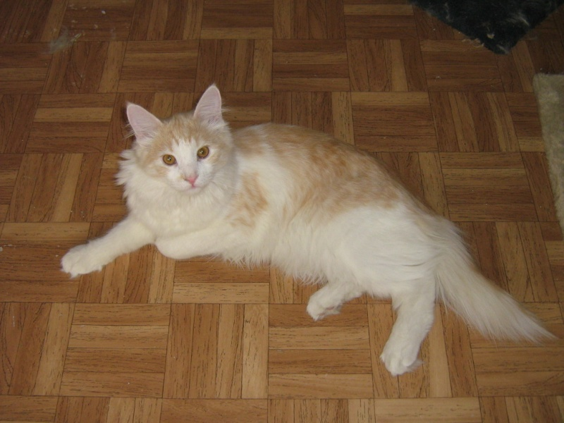 chatons sibis Elliot11