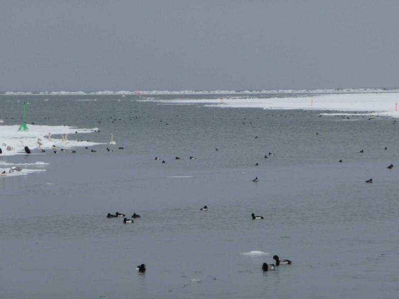 Winter 2009/210 P1000518