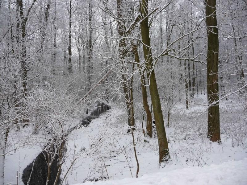 Schnee, Schnee, Schnee ! P1010311