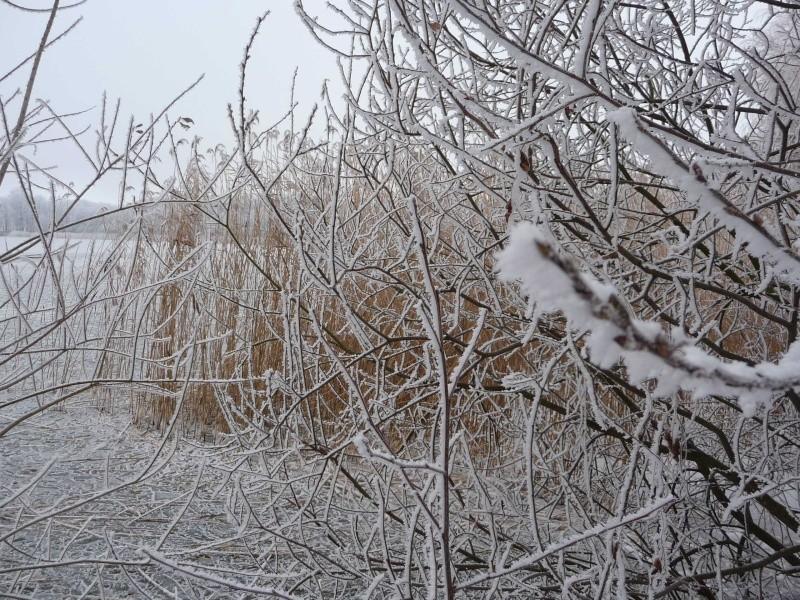 Schnee, Schnee, Schnee ! P1010312