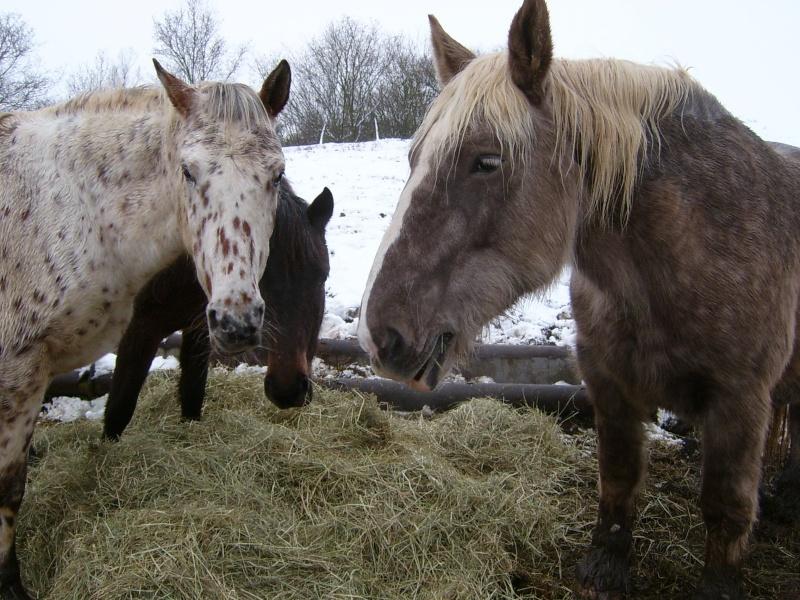 Les chevaux de coeur Caline10