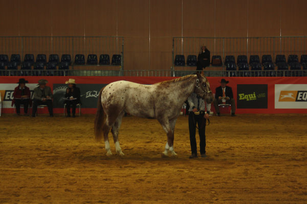 Equita'Lyon, photos Img_1310