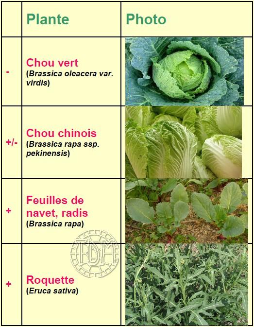 Alimentation des tortues terrestres méditerranéennes Brassi10