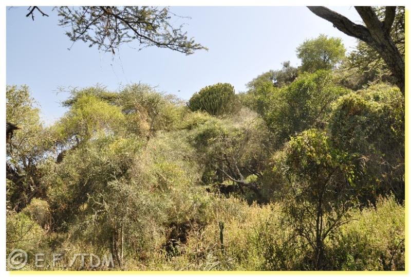 Éthiopie, quelques photos Ethio011