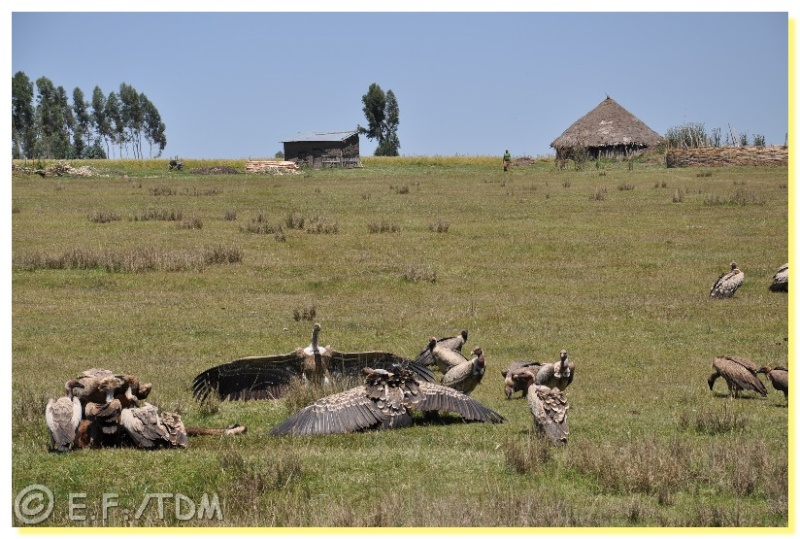 Éthiopie, quelques photos Ethio012
